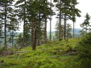 jagodziska Góry Stołowe